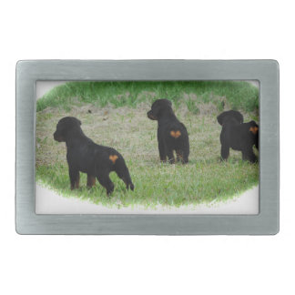 Rottweiler hearts belt buckle