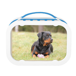 Rottweiler Lunch Box