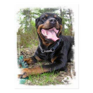 Rottweiler Photo Postcard