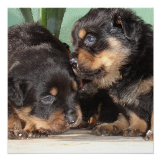 Rottweiler Puppies Best Friends Forever Perfect Poster