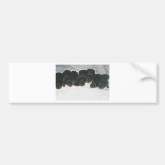 Rottweiler Puppies Bumper Sticker