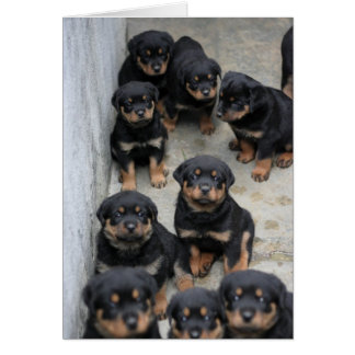 Rottweiler Puppies Card
