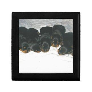 Rottweiler Puppies Gift Box