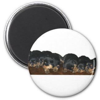 rottweiler Puppies Magnet