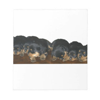 rottweiler Puppies Notepad