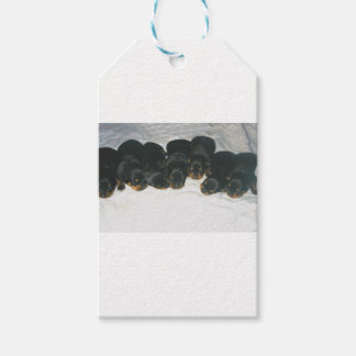Rottweiler Puppies Pack Of Gift Tags