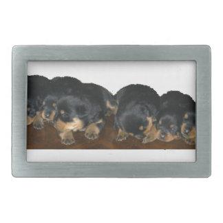 rottweiler Puppies Rectangular Belt Buckles