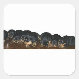 rottweiler Puppies Square Sticker