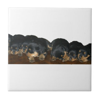 Rottweiler Puppies Tile