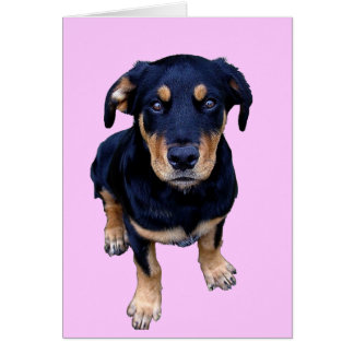 rottweiler puppy black tan dog eye contact greeting card