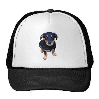 rottweiler puppy black tan dog eye contact trucker hat