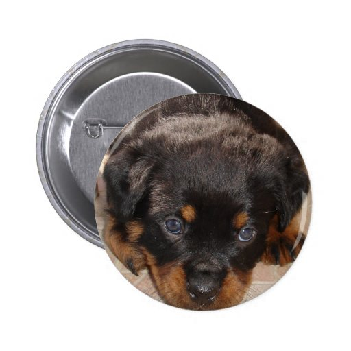 Rottweiler Puppy Crouching Low Pin