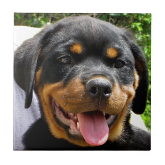 Rottweiler puppy face Dog Cute Tile