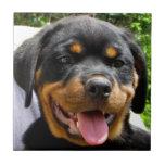 Rottweiler puppy face Dog Cute Tiles