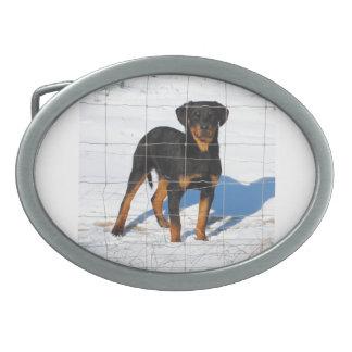 rottweiler puppy oval belt buckles