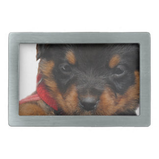 Rottweiler Puppy Red Belt Buckles