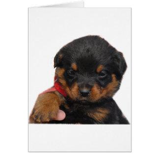Rottweiler Puppy Red Card