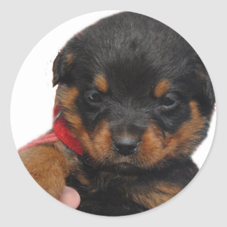 Rottweiler Puppy Red Classic Round Sticker