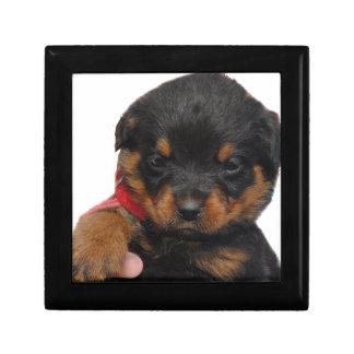 Rottweiler Puppy Red Gift Box