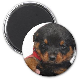 Rottweiler Puppy Red Magnet