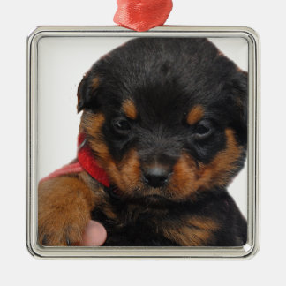 Rottweiler Puppy Red Metal Ornament