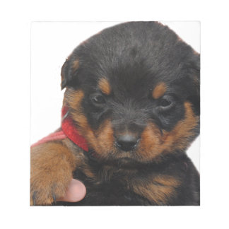 Rottweiler Puppy Red Notepad