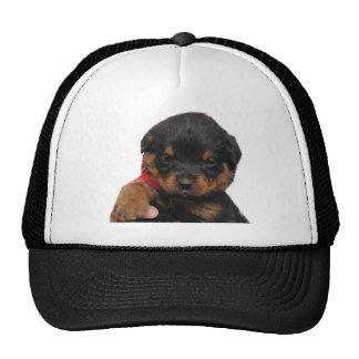 Rottweiler Puppy Red Trucker Hat