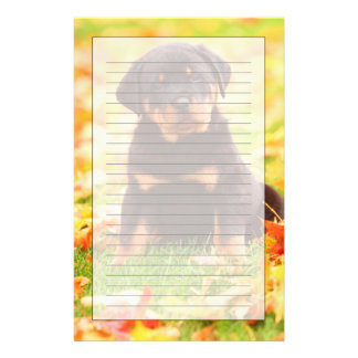 Rottweiler Puppy Sitting In Autumn Leaves Stationery
