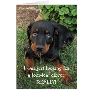 Rottweiler Puppy St. Patrick's Day Card