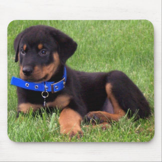 rottweiler pups. mouse pad