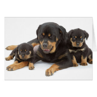 Rottweiler with two puppies card