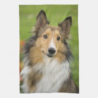 Rough Collie, dog, animal Kitchen Towel