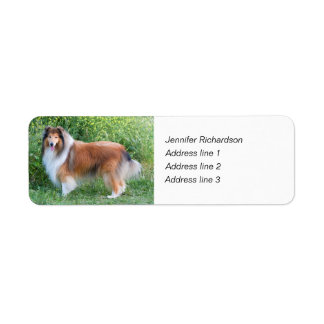 Rough collie dog custom return address labels