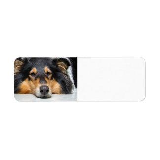 Rough collie dog nose blank return address labels