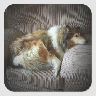 """Rough collie on armchair"""" square sticker"""