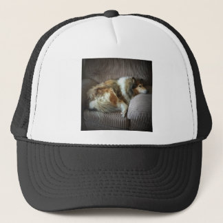 Rough collie on armchair trucker hat