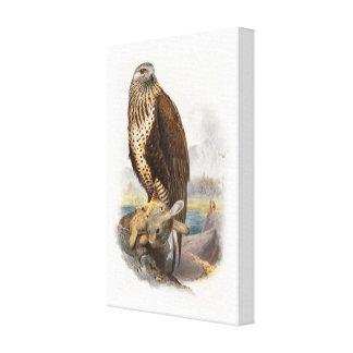 Rough-legged Buzzard Gould Birds of Great Britain Canvas Print