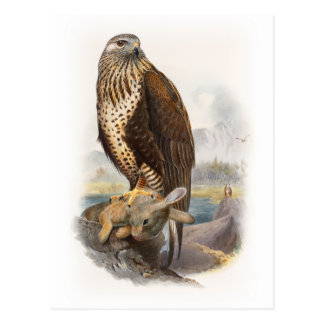 Rough-legged Buzzard Gould Birds of Great Britain Postcard