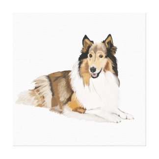 Rough, Long Haired Collie Canvas Print