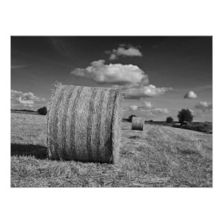 Round Straw Bales in Black & White Poster