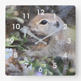 Round Tail Ground Squirrel Smelling the Flowers Clocks