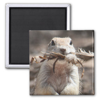 Round-tailed Ground Squirrel Magnet
