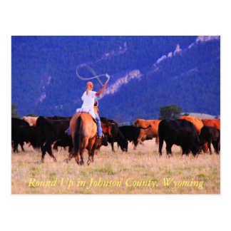 Round Up in Johnson County, Wyoming Postcard