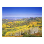 Routt National Forest in Autumn colour, near Postcard