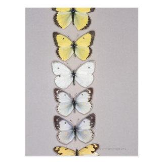 Row of butterflies postcard