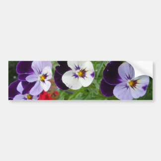 Row of Pansies Bumper Sticker