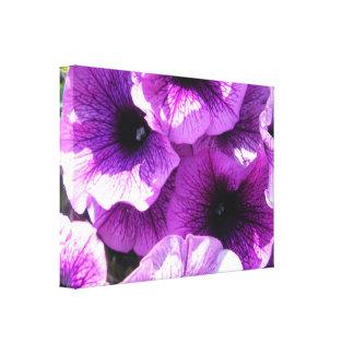 Row of Purple Wave Petunias Canvas Print