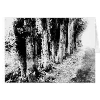 Row of Trees Black and White Greeting Card