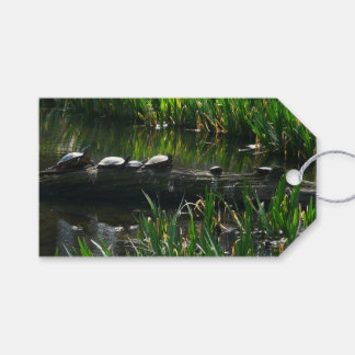 Row of Turtles Green Nature Photo Pack Of Gift Tags
