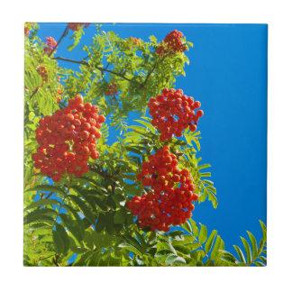 Rowan tree  with red berries tile